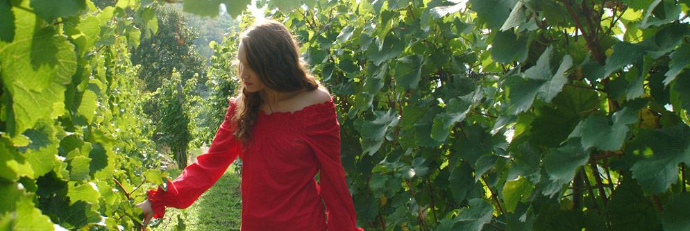 Weinreben in der Wachau sind ein schönes Erlebnis